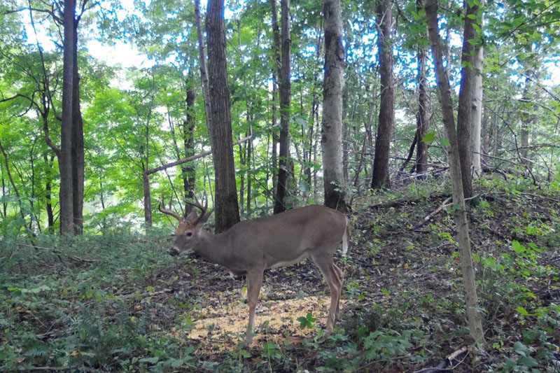 Buck Whisperer Outfitters Book Your White Tail Deer Hunt