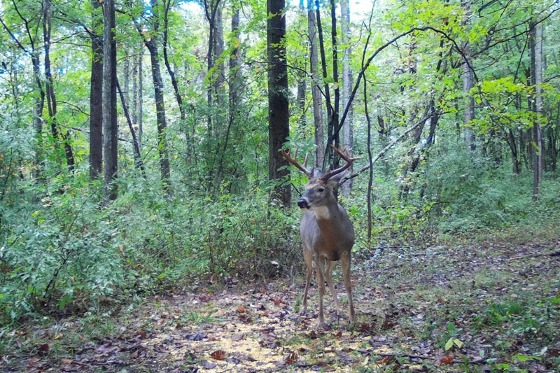 Buck Whisperer Outfitters Ohio Deer Hunting Land