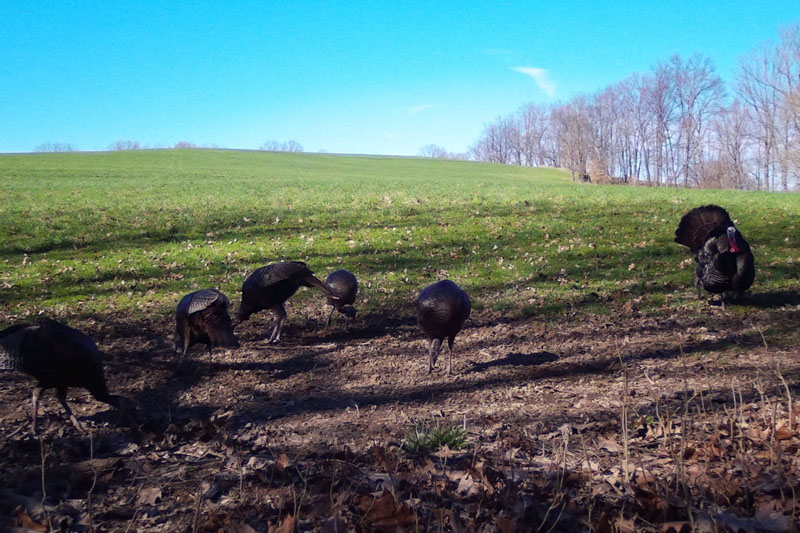 Buck Whisperer Outfitters Book Your Turkey Hunt