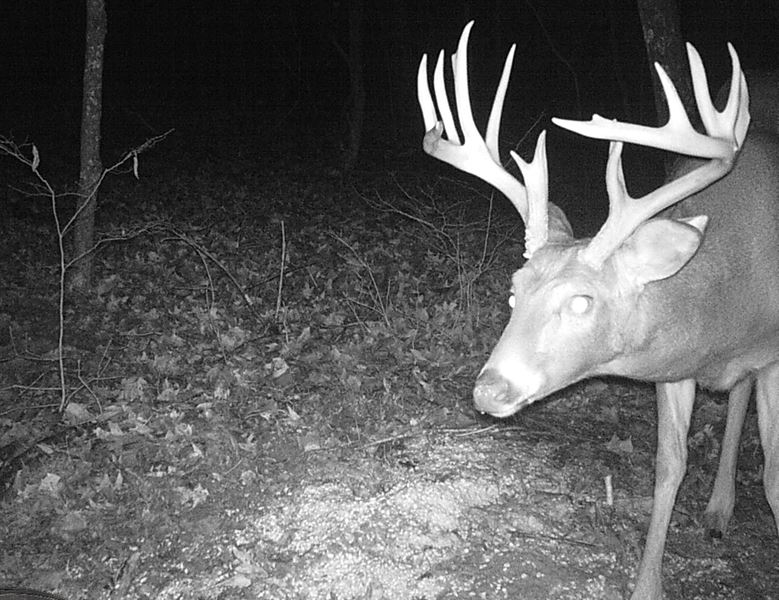 Buck Whisperer Outfitters Hunt The Best Kept Secret In The Midwest