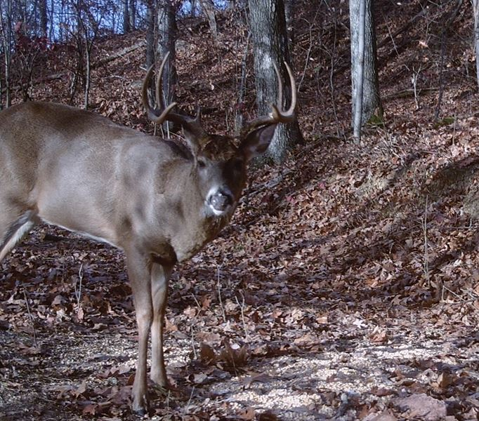 Buck Whisperer Outfitters Hunt Ohio Whitetail Deer