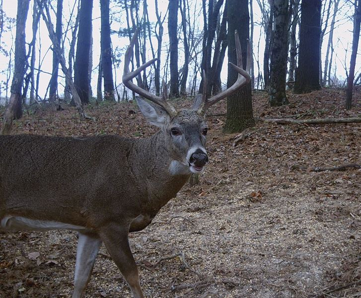 Buck Whisperer Deer Outfitters Hunt The Best Kept Secret In The Midwest